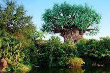 Vision Board - Disney