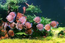 Aquascape & Ornamental Fish / by Lili Lily