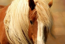 Wish I was a Horse Whisperer