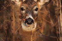 fotografie dieren
