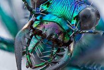 Crazy Dragonfly
