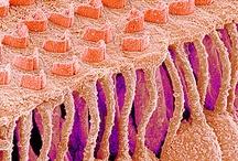 Medical Microscopy & Patho...