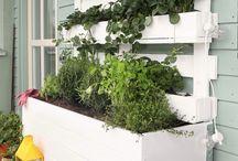 Grönsakshuset