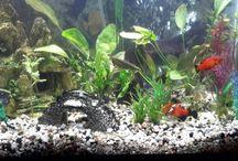 My 36 gallon Fish Aquarium