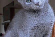 Kissan