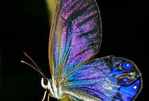 purplish butterfly