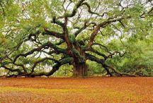 I ♥ Trees