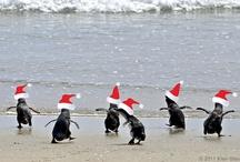 Pingüinos / Pingüinos