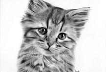 Rysunki kotów