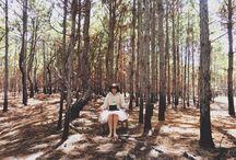 Forest / Fotos de Wladmir Dal Bó