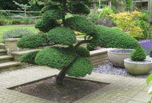 Деревья и растение