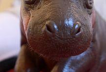 Animals!! / by Jaimie Rice