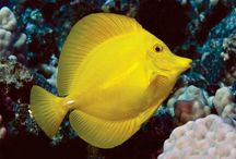 Sea animals / Sea