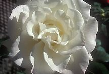 Kwiaty / White....flowers