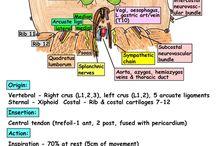 Topographic anatomy