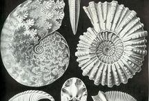 Shells in art.