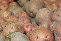 Curing potatoes