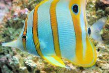 Amazing Pictures-Fish / Amazing pictures of fish