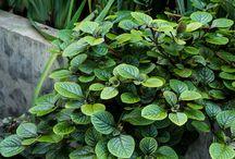 PLANT - LUSH GREEN