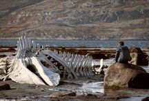Leviathan / By Andrey Zvyagintsev.  In Competition.