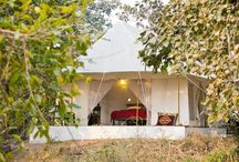 A Unique Wilderness Experience under the Stars / Enjoy a #RARE #wilderness #experience in the heart of #India. #Jamtara #Wilderness #Camp is the latest lodge on #RareIndia latest lodge in #Pench #National #Park . #Madhya #Pradesh that has a unique #eco system and affords a high ranking on the check list of #nature and #wildlife lovers in #India.  Read More: http://bit.ly/1l9BJFP