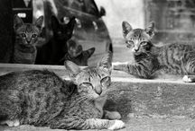 Cat / Family