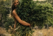 ☮Hippies Rule! ✿ / Groovy baby! The core belief of hippies revolves around the values of peace and love, essential and mind-opening supplements such as marijuana and hallucinogens are very welcome among the hippie community.