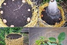 Garden / Garden projects / by J Richmond