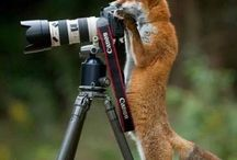 I love foxes / cute foxes