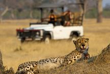 Safari Bound / African Safari Tours