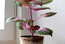 Cool Plants Stuff