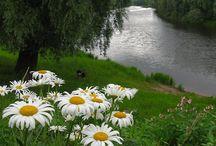 Nature Wonder