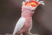 Passion-perroquets / Pour les passionnés de perroquets