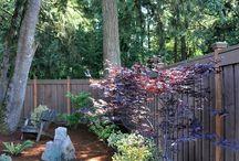 Landscaping (Backyard)