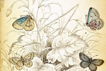 Butterfly and birds