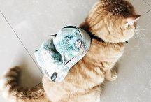 癒し  猫