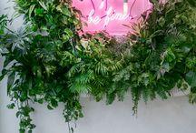 Office Deko / Deko, Pflanzen fürs Büro