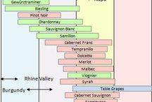 variedad de uva por temperatura optima