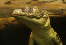 The Reptile Zoo / Have you ever been to a zoo where you can actually interact with the animals? Well now is your chance because that is what we specialize in! This is a look into all that we offer here at The Reptile Zoo