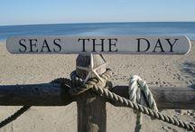 seagullོ ༄ོ ༨ ༽  ~Sea, Ocean, Beach / Sea, ocean, beach, shore