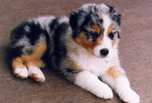 Adorable Pets / Animals, wild and domesticated!!  I am a HUGE animal lover and donate to the ASPCA and a lot of causes!!  I also own 2 and 1/2 horses,2 Australian Shepherd, 1 Mini Schnauzer, 3 cats and 2 birds and 6 hens.!!  / by Mary Shield