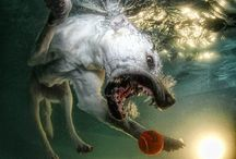 Dogs under water / by Vicki Scales