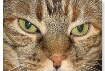 Cool Cute Cats / Adorable cat photos and art