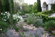 Gardening in Napa Valley