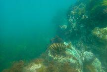 New Zealand Underwater with Olympus