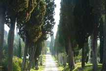 My photos: Tuscany / All the photographs have been done by me during my journeys.
