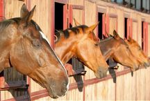 Equestrian Businesses