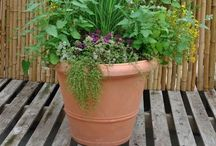 Insect Repelling Plants / Plants which will repel mosquitos and flies
