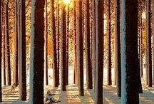 alberi / alberologia