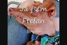 Já jsem Ftefan.